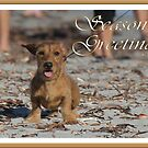 A very doxie Christmas 13 by Sarah Guiton