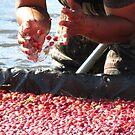 Cranberry Harvest   by debraroffo