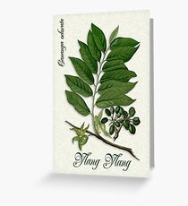 Botanical illustration of Ylang Ylang Greeting Card
