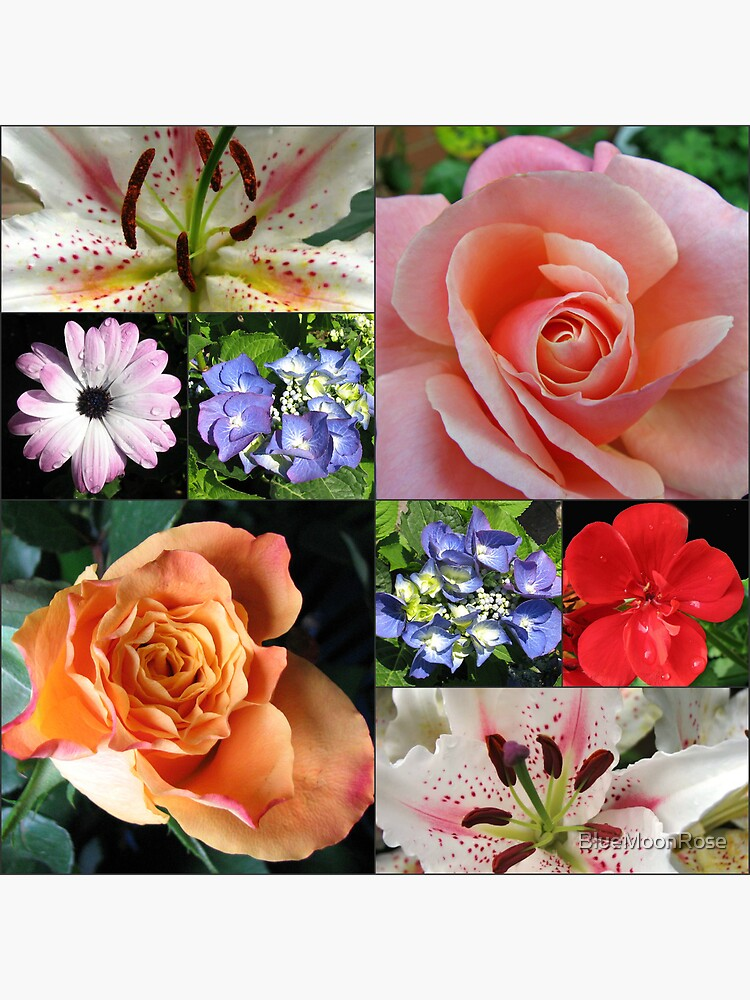 Floral Collage with Roses and Lilies von BlueMoonRose