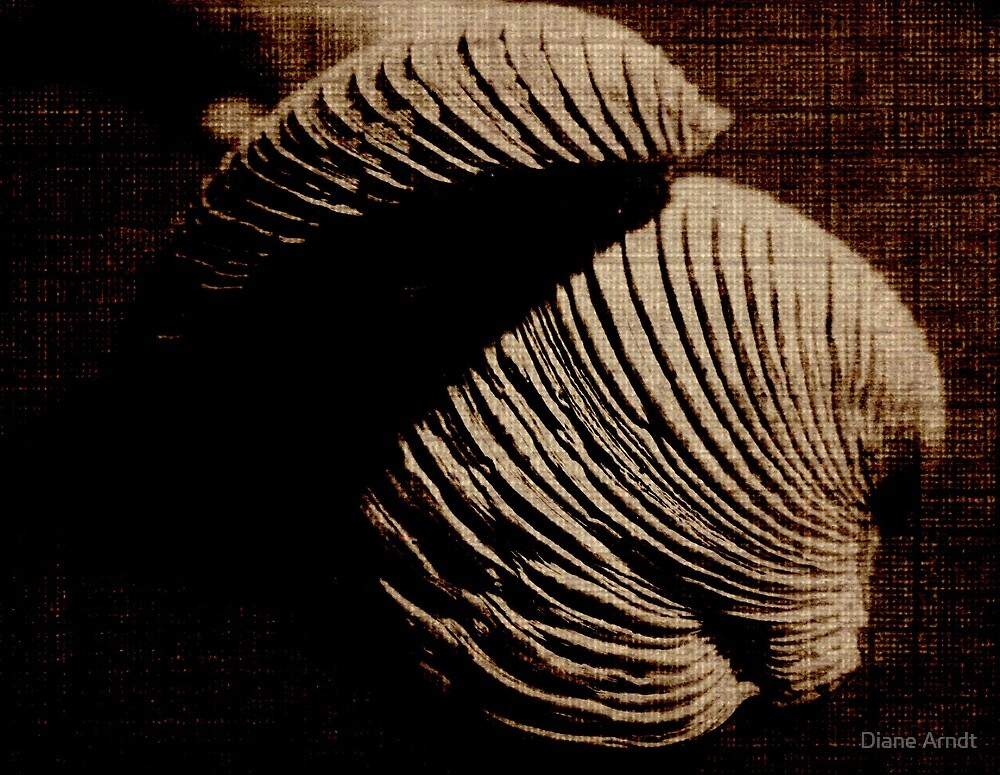 Textured Sea Shells...My First Try...Thanks Ms-Bexy !!! by Diane Arndt