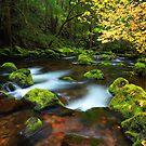 Falls Creek I by Tula Top