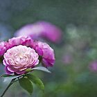 Simply roses by Maria Ismanah Schulze-Vorberg