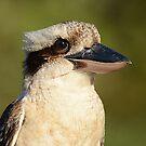Kookaburra by odarkeone
