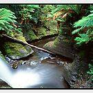 Sanctuary, Liffey Falls TAS by Chris Munn