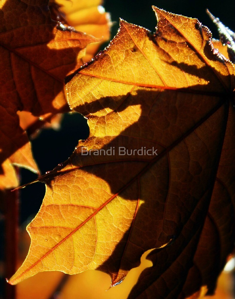 autumns last leaf~ by Brandi Burdick