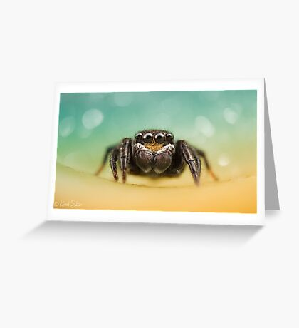 Salticidae (Unknown I.D) Greeting Card