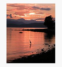 Sunset Heron Photographic Print