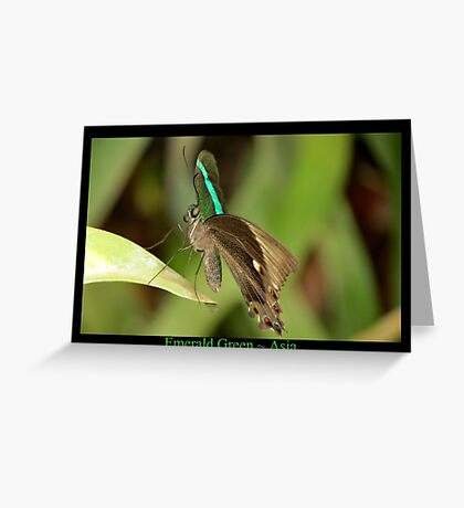 Emerald Peacock Butterfly Greeting Card