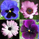 Cute Pansies and Daisies Collage von BlueMoonRose