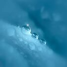 Misty Aqua Water Drops by edesigns14