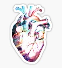 Anatomy - Heart (Watercolor) Sticker
