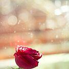 Bokeh Romance by Josie Eldred