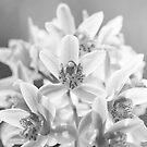 Orchid Chorus II by Josie Eldred