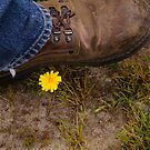 To Walk on a Flower by Guatemwc