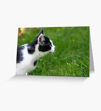 Staring Black & White Cat Greeting Card