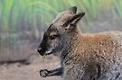 Wallaby with Flower by Elaine Manley