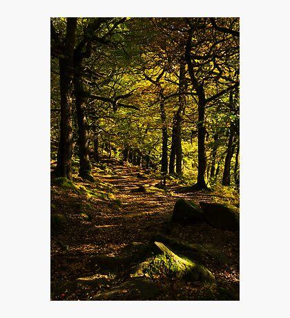 Padley Gorge Trail Photographic Print