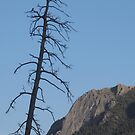 Lone Tree Hill by Christine Ford