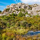 Pond among Glacial Moraines by Michael Brewer