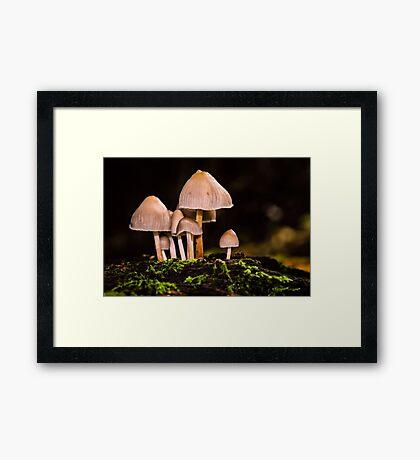 Toadstools Framed Print