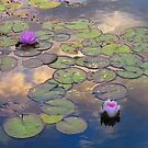 Twilight Pond by Alex Call