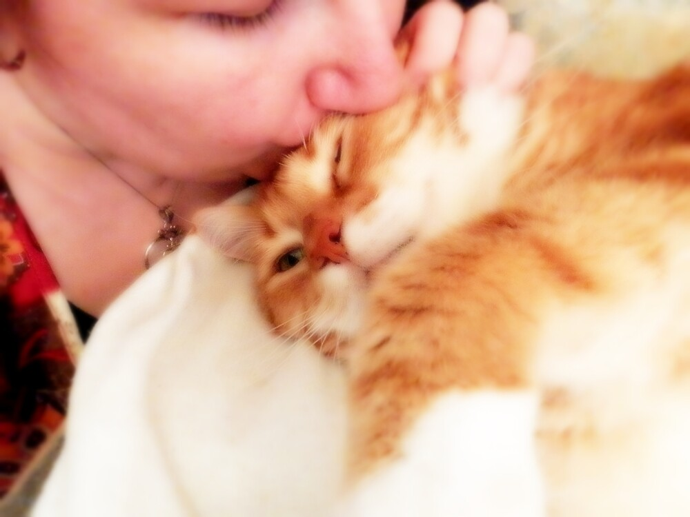 Kitty Kisses by Kristie Theobald