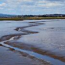 Tamar Wetlands by margotk