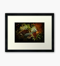 Two Victoria Crowned Pigeons in mystery forest Framed Print