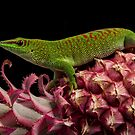 Tropical gecko by Angi Wallace