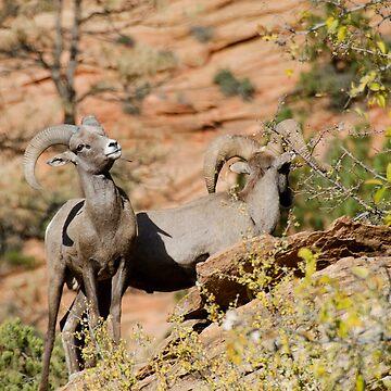 Big Horn Sheep in Zion by gladyanne
