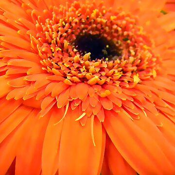 Big Orange Flower by gladyanne