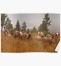 Columbia Rams Poster