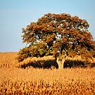 The Adventitious Tree by Brian Gaynor