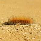 Yellow Bear Caterpillar by Sharon Woerner