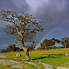 """A Rainbow And The Tree"" by Phil Thomson IPA"