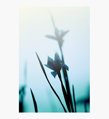 Blue haze Photographic Print