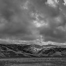 Grapevine by Mike Herdering