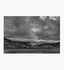 Grapevine Photographic Print