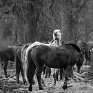 Gloucestershire Horses by JPassmore