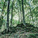The Jordan's beech wood, Catalonia by Marc Garrido Clotet