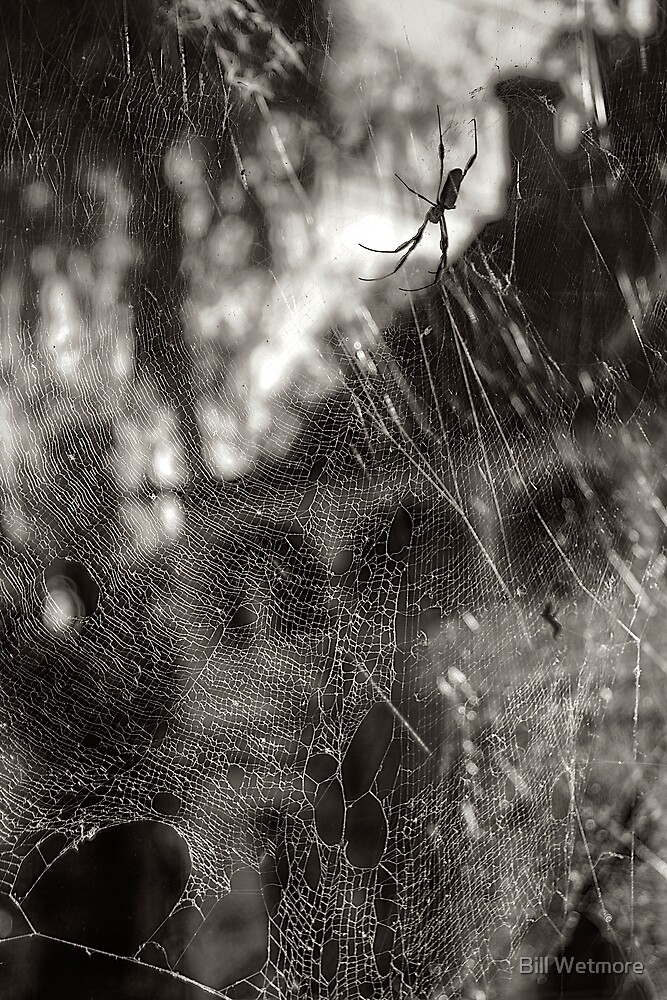 Web by Bill Wetmore