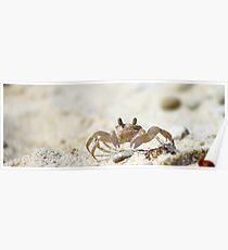 sand crab Poster