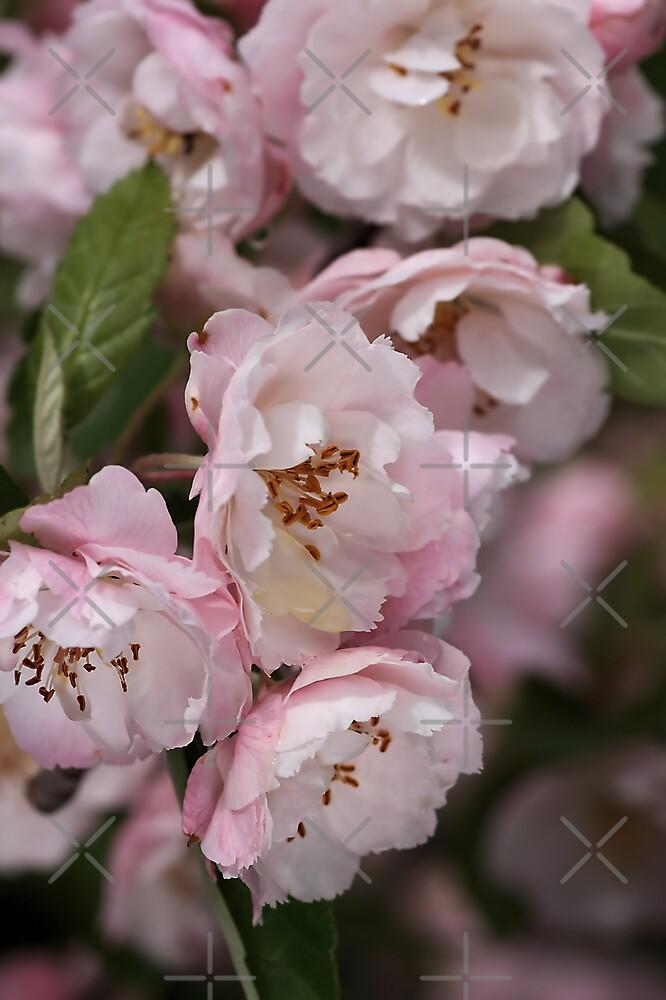 Marshmallow Pink & White Blossom by Joy Watson