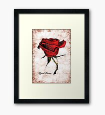 My love is like a red, red rose Framed Print