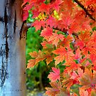 Essence Of Fall by K D Graves Photography