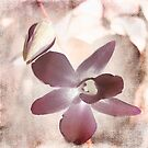 Orchid in Pastels by Ellen Cotton