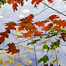 Autumn Shore by Harry H Hicklin