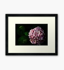....the last flowers...   [FEATURED] Framed Print