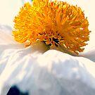 Like a Prima-Ballerina! by Lozzar Flowers & Art